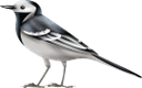 птица, отряд пернатых, фауна, bird, feathered squad, vogel, gefiederte truppe, oiseau, escouade à plumes, faune, pájaro, escuadrón emplumado, uccello, squadra piumata, pássaro, esquadrão de penas, fauna, птах, загін пернатих