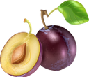 слива, синяя слива, фрукты, синий, plum, blue plum, blue, pflaume, blaue pflaume, frucht, blau, prune, prune bleue, fruit, bleu, ciruela, ciruela azul, prugna, prugna blu, frutta, blu, ameixa, ameixa azul, fruta, azul, синя слива, фрукти, синій