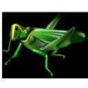 grasshopper, 256