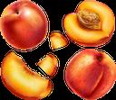 персик, спелый персик, красный, продукты питания, зеленое растение, фрукты, еда, peach, ripe peach, red, green plant, fruit, food, pfirsich, reifer pfirsich, rot, grünpflanze, obst, essen, pêche, pêche mûre, rouge, plante verte, fruits, nourriture, melocotón, melocotón maduro, rojo, pesca, pesca matura, rosso, pianta verde, frutta, cibo, pêssego, pêssego maduro, vermelho, planta verde, fruta, comida, стиглий персик, червоний, продукти харчування, зелена рослина, фрукти, їжа