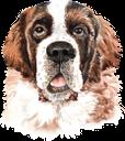 собака, сенбернар, домашние животные, фауна, dog, pets, hund, heiliger bernard, haustiere, chien, saint bernard, animaux domestiques, faune, perro, mascotas, cane, san bernardo, animali domestici, cão, são bernardo, animais de estimação, fauna, пес, домашні тварини