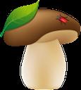 гриб, белый гриб, лесной гриб, грибы, mushroom, white fungus, wild mushroom, mushrooms, weißer pilz, pilz, pilze, champignon, champignon blanc, champignon sauvage, champignons, seta, hongo blanco, seta silvestre, setas, funghi bianchi, funghi selvatici, funghi, fungos brancos, cogumelos selvagens, cogumelos, білий гриб, лісовий гриб, гриби