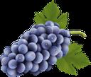 виноград, гроздь винограда, синий виноград, винная ягода, виноделие, grapes, a bunch of grapes, blue grapes, wine berry, winemaking, trauben, eine weintraube, blaue trauben, weinbeeren, weinbereitung, raisin, grappe de raisin, raisin bleu, baie de vin, vinification, un racimo de uvas, uvas azules, bayas de vino, elaboración del vino, uva, un grappolo d'uva, uva blu, bacca del vino, vinificazione, uvas, um cacho de uvas, uvas azuis, vinho berry, vinificação, гроно винограду, синій виноград, винна ягода, виноробство