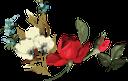 цветы, красный цветок, роза, flowers, red flower, spring, blumen, rote blume, frühling, fleurs, fleur rouge, printemps, rose, flor roja, fiori, fiore rosso, primavera, flores, flor vermelha, mola, rosa, квіти, червона квітка, весна, троянда