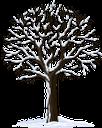 дерево, зеленое растение, флора, сухое дерево, tree, green plant, dry tree, baum, grüne pflanze, trockener baum, arbre, plante verte, flore, arbre sec, árbol, árbol seco, albero, pianta verde, albero secco, árvore, planta verde, flora, árvore seca, зелена рослина, сухе дерево, зима
