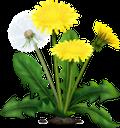 одуванчик, цветок одуванчика, полевые цветы, желтый цветок, весенние цветы, цветы, флора, dandelion, dandelion flower, wildflowers, yellow flower, spring flowers, flowers, löwenzahn, löwenzahnblume, wildblumen, gelbe blume, frühlingsblumen, blumen, pissenlit, fleur de pissenlit, fleurs sauvages, fleur jaune, fleurs de printemps, fleurs, flore, diente de león, flor de diente de león, flor amarilla, flores de primavera, dente di leone, fiore di tarassaco, fiori di campo, fiore giallo, fiori primaverili, fiori, dente de leão, flor dente de leão, flores silvestres, flor amarela, flores da primavera, flores, flora, кульбаба, квітка кульбаби, польові квіти, жовта квітка, весняні квіти, квіти