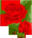 цветок розы, красная роза, цветы, бутон розы, флористика, флора, flower roses, red rose, flowers, rosebud, floristry, blumenrosen, rote rose, blumen, rosenknospe, floristik, roses de fleurs, rose rouge, fleurs, bouton de rose, fleuristerie, flore, rosa roja, capullo de rosa, florística, rose di fiori, rosa rossa, fiori, boccioli di rosa, floristica, rosas de flores, rosa vermelha, flores, botão de rosa, produtos de floricultura, flora, квітка троянди, червона троянда, квіти, бутон троянди
