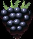 ежевика, черная ягода, ягода ежевики, черный, blackberry, black berry, black, schwarze beere, brombeere, schwarz, baie noire, mûre, noir, bacca nera, mora, nero, baga preta, preto, ожина, чорна ягода, ягода ожини, чорний