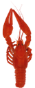 рак, речной рак, ракообразные, красный рак, пиво с раками, cancer, river cancer, crustaceans, red cancer, beer with crayfish, krebs, krebse, muscheln, rot krebs, bier mit krebs, le cancer, les écrevisses, les crustacés, le cancer rouge, la bière aux écrevisses, cáncer, cangrejos, moluscos, cáncer tinto, cerveza con los cangrejos, il cancro, gamberi, frutti di mare, cancro rosso, birra con gamberi di fiume, câncer, lagostas, mariscos, câncer vermelho, cerveja com lagostins, річковий рак, ракоподібні, червоний рак, пиво з раками