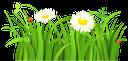 ромашка, ромашковое поле, трава, ромашка луговая, полевые цветы, божья коровка, chamomile, chamomile field, grass, chamomile meadow, wild flowers, ladybug, kamille, kamille feld, gras, kamille wiese, wilde blumen, marienkäfer, camomille, champ de camomille, herbe, prairie de camomille, fleurs sauvages, coccinelle, manzanilla, campo de la manzanilla, hierba, prado de manzanilla, mariquita, camomilla, campo di camomilla, erba, prato di camomilla, fiori selvatici, coccinella, camomila, campo de camomila, grama, prado de camomila, flores silvestres, joaninha, ромашкове поле, ромашка лугова, польові квіти, сонечко
