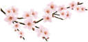флора, весна, цветы, цветущая вишня, spring, flowers, cherry blossoms, frühling, blumen, kirschblüten, flore, printemps, fleurs, fleurs de cerisier, feuille verte, flores de cerezo, la hoja verde, fiori, fiori di ciliegio, verde foglia, flora, primavera, flores, flores de cerejeira, folha verde