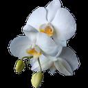 орхидея, цветок орхидеи, белый цветок, orchid, orchid flower, white flower, orchidee, orchidee blume, weiße blume, orchidée, fleur d'orchidée, fleur blanche, flor de la orquídea, flor blanca, orchidea, fiore di orchidea, fiore bianco, orquídea, flor da orquídea, flor branca