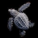 черепашка, морская черепаха, черепашонок, маленькая черепаха, turtle, sea turtle, little turtle, schildkröte, meeresschildkröte, kleine schildkröte, tortue, tortue de mer, petite tortue, tortuga, tortugas marinas, pequeña tortuga, tartaruga marina, piccola tartaruga, tartaruga, tartaruga de mar, cherepashonok, pequena tartaruga