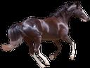 конь, скаковая лошадь, вороной, лошадь, скакун, породистая лошадь, конский волос, мустанг, дикая лошадь