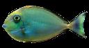 морская рыба, sea fish, seefische, poissons d'eau salée, peces de agua salada, pesci di mare, peixes de água salgada
