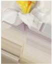 белый цветок, зеленое растение, садовые цветы, white flower, green plant, garden flowers, weiße blume, grüne pflanze, garten blumen, fleur blanche, plante verte, fleurs de jardin, flor blanca, flores de jardín, fiore bianco, pianta verde, fiori da giardino, flor branca, planta verde, flores de jardim, біла квітка, зелена рослина, садові квіти