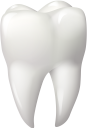 зуб, медицина, органы человека, анатомия, стоматология, части тела, тело человека, medicine, human organs, anatomy, tooth, dentistry, body parts, human body, medizin, menschliche organe, zahn, zahnheilkunde, körperteile, menschlicher körper, médecine, organes humains, anatomie, dent, dentisterie, parties du corps, corps humain, órganos humanos, anatomía, diente, odontología, partes del cuerpo, cuerpo humano, organi umani, odontoiatria, parti del corpo, corpo umano, medicina, órgãos humanos, anatomia, dente, odontologia, partes do corpo, corpo humano, органи людини, анатомія, стоматологія, частини тіла, тіло людини