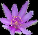 синий цветок, цветы, флора, blue flower, flowers, blaue blume, blumen, fleur bleue, fleurs, flore, fiore blu, fiori, flor azul, flores, flora, синя квітка, квіти