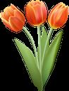 тюльпан, букет цветов, букет тюльпанов, цветы, красные тюльпаны, красные цветы, флора, весна, tulip, bouquet of flowers, bouquet of tulips, flowers, red tulips, red flowers, spring, tulpe, blumenstrauß, blumenstrauß von tulpen, blumen, rote tulpen, rote blumen, frühling, tulipe, bouquet de fleurs, bouquet de tulipes, fleurs, tulipes rouges, fleurs rouges, flore, printemps, tulipán, ramo de flores, ramo de tulipanes, tulipanes rojos, flores rojas, tulipano, bouquet di fiori, bouquet di tulipani, fiori, tulipani rossi, fiori rossi, tulipa, buquê de flores, buquê de tulipas, flores, tulipas vermelhas, flores vermelhas, flora, primavera, букет квітів, букет тюльпанів, квіти, червоні тюльпани, червоні квіти