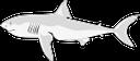акула, морская рыба, акульи плавники, морской хищник, shark, sea fish, shark fins, sea predator, hai, seefisch, haifischflossen, meer räuber, requin, poissons de mer, les nageoires de requin, mer prédateur, tiburón, pescado de mar, aletas de tiburón, depredador del mar, squalo, pesce di mare, pinne di squalo, predatore del mare, tubarão, peixes do mar, barbatanas de tubarão, predador do mar