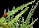 трава, божья коровка, зеленая трава, grass, ladybug, green grass, gras, marienkäfer, grünes gras, herbe, coccinelle, herbe verte, hierba, mariquita, hierba verde, erba, coccinella, erba verde, grama, joaninha, grama verde, сонечко, зелена трава