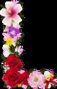цветочный алфавит, английский алфавит, образование, буквы, цветочные буквы, праздничные украшения, буквы и цифры, цветы, природа, flower alphabet, english alphabet, education, letters, flower letters, holiday decorations, letters and numbers, flowers, blumenalphabet, englisches alphabet, bildung, buchstaben, blumenbuchstaben, feiertagsdekorationen, buchstaben und zahlen, blumen, natur, alphabet de fleurs, alphabet anglais, éducation, lettres, lettres de fleurs, décorations de vacances, lettres et chiffres, fleurs, flore, nature, alfabeto inglés, educación, decoraciones navideñas, letras y números, naturaleza, alfabeto floreale, alfabeto inglese, educazione, lettere, lettere floreali, decorazioni natalizie, lettere e numeri, fiori, natura, alfabeto de flores, alfabeto inglês, educação, letras, letras de flores, decorações de férias, letras e números, flores, flora, natureza, квітковий алфавіт, англійський алфавіт, освіта, літери, квіткові літери, святкові прикраси, літери і цифри, квіти, флора