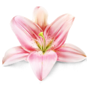 lily, flower, by, artdesigner.lv
