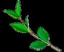 зеленое растение, green plant, grüne pflanze, plante verte, las plantas verdes, pianta verde, planta verde, зеленый лист, лист дерева, green leaf, tree leaves, grünes blatt, baumblätter, feuille verte, les feuilles des arbres, hoja verde, las hojas de los árboles, foglia verde, le foglie degli alberi, folha verde, folhas de árvore, ветка дерева