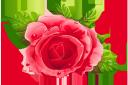 красная роза, сердце, любовь, цветы, red rose, heart, love, flowers, rote rose, herz, liebe, blumen, rose rouge, coeur, amour, fleurs, rosa roja, corazón, rosa rossa, cuore, amore, fiori, rosa vermelha, coração, amor, flores, червона троянда, серце, любов, квіти