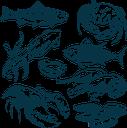 рыбы, морская рыба, тунец, устрица, кальмар, мидии, морепродукты, форель, омар, креветка, еда, морская фауна, fish, sea fish, tuna, trout, squid, crayfish, lobster, shrimp, oyster, mussels, seafood, food, marine fauna, fisch, seefisch, thunfisch, forelle, tintenfisch, flusskrebse, hummer, garnelen, austern, muscheln, meeresfrüchte, lebensmittel, meeresfauna, poisson, poisson de mer, thon, truite, calmar, écrevisse, homard, crevette, huître, moules, fruits de mer, nourriture, faune marine, pescado, pescado de mar, atún, trucha, calamar, cangrejo de río, langosta, camarones, ostras, mejillones, mariscos, pesce, pesce di mare, tonno, trota, calamari, aragoste, gamberi, ostriche, cozze, frutti di mare, cibo, fauna marina, peixe, peixe do mar, atum, truta, lula, lagosta, camarão, ostra, mexilhões, frutos do mar, alimentos, fauna marinha, риби, морська риба, тунець, раки, устриця, мідії, морепродукти, їжа, морська фауна