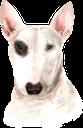 собака, бультерьер, домашние животные, фауна, dog, pets, hund, bullterrier, haustiere, chien, animaux domestiques, faune, perro, mascotas, cane, animali domestici, cachorro, bull terrier, animais de estimação, fauna, пес, домашні тварини