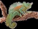 хамелеон, хамелеон на ветке, chameleon, chamäleon, caméléon, camaleonte, camaleão