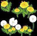 одуванчик, зеленый лист, зеленое растение, желтый цветок, полевые цветы, dandelion, green leaf, green plant, yellow flower, wild flowers, löwenzahn, grünes blatt, grüne pflanze, gelbe blume, wilde blumen, pissenlit, feuille verte, plante verte, fleur jaune, fleurs sauvages, diente de león, hoja verde, flor amarilla, dente di leone, foglia verde, pianta verde, fiore giallo, fiori selvatici, dente-de-leão, folha verde, planta verde, flor amarela, flores silvestres, кульбаба, зелений лист, зелена рослина, жовта квітка, польові квіти