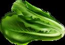 салат, листья салата, зеленый, овощи, lettuce, green, vegetables, salat, grün, gemüse, laitue, vert, légumes, lechuga, vegetales, lattuga, verdure, alface, verde, legumes, листя салату, зелений, овочі