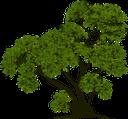 дерево, лиственное дерево, зеленое растение, tree, deciduous tree, green plant, baum, laubbaum, grüne pflanze, arbre, arbre à feuilles caduques, plante verte, árbol, árbol de hoja caduca, albero, latifoglia, pianta verde, árvore, árvore de folha caduca, planta verde, листяне дерево, зелена рослина