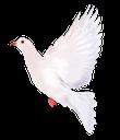 голубь мира, белый голубь, фауна, птицы, голубь, bird, dove, vogel, taube, faune, oiseau, colombe, pájaro, paloma, uccello, colomba, fauna, pássaro, pomba