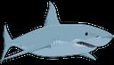 акула, морская рыба, акульи плавники, белая акула, shark, sea fish, shark fins, white shark, hai, seefisch, haifischflossen, weißer hai, requin, poissons de mer, ailerons de requin, requin blanc, tiburón, pescado de mar, aletas de tiburón, tiburón blanco, squalo, pesce di mare, pinne di squalo, squalo bianco, tubarão, peixe de água salgada, barbatanas de tubarão, tubarão branco