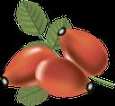 шиповник, красная ягода, ягода шиповника, красный, rosehip, red berry, wild rose berry, red, hagebutte, rote beere, wilde rosenbeere, rot, églantier, baie rouge, baie de rose sauvage, rouge, rosa mosqueta, baya roja, rosa salvaje, rojo, rosaia, bacca rossa, bacche di rosa selvatica, rosso, roseira, baga vermelha, baga de rosa selvagem, vermelha, шипшина, червона ягода, ягода шипшини, червоний