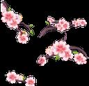флора, весна, цветы, цветущая вишня, зеленый лист, spring, flowers, cherry blossoms, green leaf, frühling, blumen, kirschblüten, grünes blatt, flore, printemps, fleurs, fleurs de cerisier, feuille verte, flores de cerezo, la hoja verde, fiori, fiori di ciliegio, verde foglia, flora, primavera, flores, flores de cerejeira, folha verde, сакура
