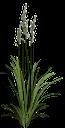 куст травы с колосками, зеленый куст травы, трава, зеленое растение, bush grass with spikelets, green grass bush, grass, green plant, busch gras mit ährchen, grünen busch gras, gras, grünpflanze, buisson herbe avec épillets, herbe brousse vert, herbe, plante verte, hierba arbusto con espiguillas, hierba verde arbusto, hierba, las plantas verdes, erba cespuglio con spighette, erba verde cespuglio, erba, pianta verde, grama mato com spikelets, arbusto verde grama, capim, planta verde
