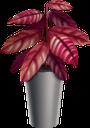 фикус, комнатные растения, вазон, зеленое растение, house plants, flowerpot, green plant, zimmerpflanzen, blumentopf, grünpflanze, plantes d'intérieur, pot de fleur, plante verte, plantas de interior, maceta, piante da appartamento, vaso da fiori, pianta verde, ficus, plantas da casa, vaso de plantas, planta verde, фікус, кімнатні рослини, зелена рослина