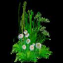 цветы ромашки, трава, ромашка полевая, полевые цветы, flowers of a camomile, a grass, a camomile field, field flowers, kamille blumen, gras, feld gänseblümchen, wildblumen, fleurs de camomille, herbe, champ de marguerite, fleurs sauvages, flores de manzanilla, hierba, campo de margaritas, fiori di camomilla, erba, campo margherita, fiori di campo, flores de camomila, grama, campo da margarida, flores silvestres