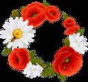 цветочная рамка, рамка для фотошопа, цветы, flower frame, frame for photoshop, flowers, blumenrahmen, rahmen für photoshop, blumen, cadre fleur, cadre pour photoshop, fleurs, marco de flores, marco para photoshop, cornice floreale, cornice per photoshop, fiori, quadro de flores, quadro para photoshop, flores, квіткова рамка, рамка для фотошопу, квіти, красные маки, ромашка