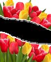 тюльпан, букет цветов, букет тюльпанов, цветы, красный тюльпан, желтый тюльпан, красный цветок, желтый цветок, флора, весна, tulip, bouquet of flowers, bouquet of tulips, flowers, red tulip, yellow tulip, red flower, yellow flower, spring, tulpe, blumenstrauß, blumenstrauß von tulpen, blumen, rote tulpe, gelbe tulpe, rote blume, gelbe blume, frühling, tulipe, bouquet de fleurs, bouquet de tulipes, fleurs, tulipe rouge, tulipe jaune, fleur rouge, fleur jaune, flore, printemps, tulipán, ramo de flores, ramo de tulipanes, tulipán rojo, tulipán amarillo, flor roja, flor amarilla, tulipano, bouquet di fiori, bouquet di tulipani, fiori, tulipano rosso, tulipano giallo, fiore rosso, fiore giallo, tulipa, buquê de flores, buquê de tulipas, flores, tulipa vermelha, tulipa amarela, flor vermelha, flor amarela, flora, primavera, букет квітів, букет тюльпанів, квіти, червоний тюльпан, жовтий тюльпан, червоний квітка, жовта квітка