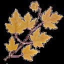 желтый лист клена, ветка дерева  клена с листьями, дерево клен, yellow maple leaf, maple tree branch with leaves, maple tree, gelb ahornblatt, ahornbaum zweig mit blättern, ahornbaum, feuille d'érable jaune, branche d'arbre avec des feuilles d'érable, arbre d'érable, hoja de arce amarilla, rama de árbol de arce con hojas, árbol de arce, giallo foglia d'acero, ramo di un albero di acero con foglie, acero, folha de bordo amarela, ramo de árvore de bordo com folhas, árvore de bordo