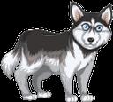 собака, аляскинский маламут, животные, пес, animals, dog, tiere, hund, malamute d'alaska, animaux, chien, animales, perro, alaskan malamute, animali, cane, cachorro, alasca, malamute, animais, cão, тварини