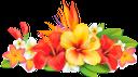 желтый цветок, красный цветок, цветы, флора, yellow flower, red flower, flowers, gelbe blume, rote blume, blumen, fleur jaune, fleur rouge, fleurs, flore, flor amarilla, flor roja, fiore giallo, fiore rosso, fiori, flor amarela, flor vermelha, flores, flora, жовта квітка, червона квітка, квіти