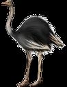 фауна, птицы, страус, bird, ostrich, vogel, strauß, faune, oiseau, autruche, pájaro, uccello, struzzo, fauna, pássaro, avestruz