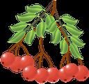 рябина, красная ягода, ягода рябины, красный, red berry, red, rote beeren, vogelbeere, rot, baie rouge, sorbier, rouge, baya roja, rojo, bacca rossa, rosso, baga vermelha, rowanberry, vermelho, горобина, червона ягода, ягода горобини, червоний