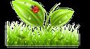 экология, зеленое растение, зеленая трава, божья коровка, ecología, hierba verde, mariquita, ecologia, planta verde, grama, joaninha, écologie, plante verte, l'herbe verte, coccinelle, ökologie, grüne pflanze, grünes gras, marienkäfer, ecology, green plant, green grass, ladybug, лист